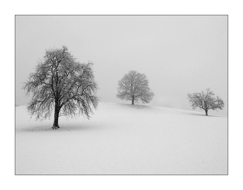 Meine bäume bei schneefall canon g2 2 2003 meine bäume frühling von